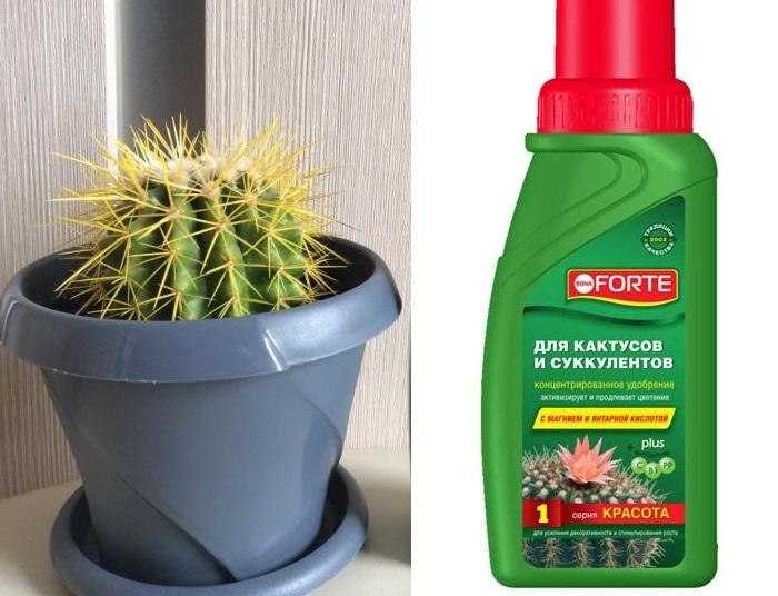 Удобрение слабого кактуса