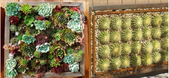 Вертикальные стены с кактусами