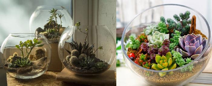 Флорариумы с кактусами