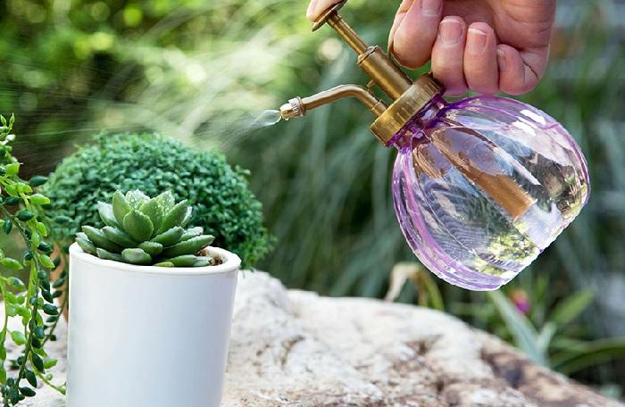Распыление воды на кактус