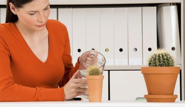 Женщина поливает кактус