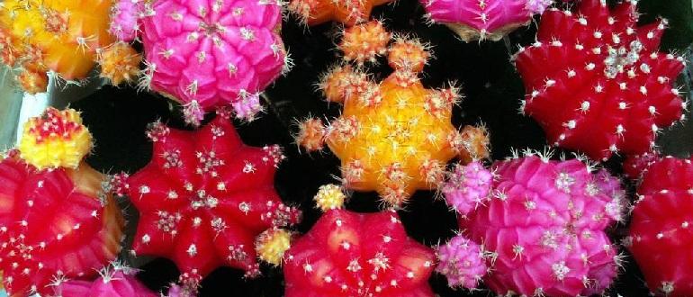 Как покрасить кактус