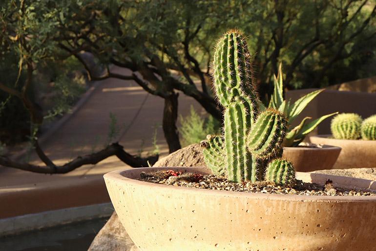 Пустынный вид