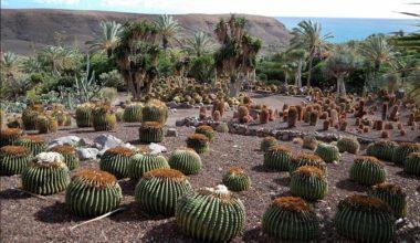 страна кактусов